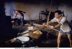 5571400 (ngao5) Tags: men industry factory berries device vietnam used using worker dye dying laborer grind types hemp crude phatdiem timeincnotown 5571400