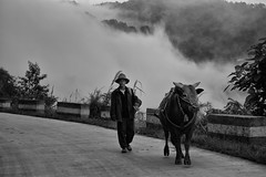 out of the mist~ Yunnan (~mimo~) Tags: china road trees mist mountain man hat clouds bull farmer yunnan honghe mimokhairphotography