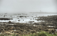 A gannet flies through thick fog on Alderney (neilalderney123) Tags: bird water weather fog alderney gannet clonque 2016neilhoward