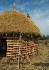 Man covers the thatched roof of a traditional ethiopian house, Kembata, Alaba kuito, Ethiopia (Eric Lafforgue) Tags: africa wood roof sky people house color home vertical architecture outdoors photography wooden construction village adult african traditional culture straw progress hut thatch ladder typical ethiopia thatched hornofafrica developing ethiopian riftvalley eastafrica thiopien etiopia abyssinia ethiopie etiopa ruralscene unrecognizable buildingexterior onemanonly  etiopija 1people ethiopi alaba  toukoul etiopien etipia halaba  etiyopya  unrecognizableperson    kembata      alabakuito ethio163357