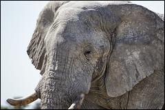_SG_2016_05_Namibia_0084_IMG_1331 (_SG_) Tags: auto africa park trip elephant tree water car nationalpark wasser solitude desert hole national afrika giraffe ausflug elefant namibia herd baum strauch etosha watering wateringhole elefanten 2016 einde giraffen etoshanationalpark standpost wasserstelle etoshapark elefantenherde giraffenherde giraffesherd