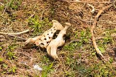 7K8A8820 (rpealit) Tags: bear nature scenery wildlife area bones hatchery pequest