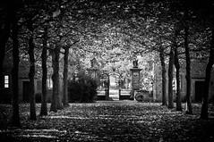Kloster Bentlage (KJ Photographie) Tags: autumn trees blackandwhite black tree leaves forest germany landscape deutschland nikon laub herbst nrw landschaft wald bume baum mnsterland lightroom klosterbentlage benlagerbusch