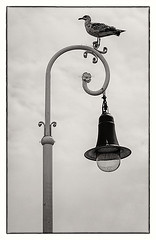 El vigía del faro (a6elsan) Tags: shadow sky white black lamp look lines clouds coast streetlight bend loop background seagull watching symmetry harmony headlight beacon desing equilibrium homesickness
