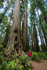 RN&SP5202016-37 (Ranbo (Randy Baumhover)) Tags: california forest t redwoods redwoodnationalpark