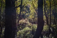 Lugares secretos (cmarga28) Tags: hojas verde ocres humedad luces sombras contraluz hayedo pinar lillo len espaa spain picosdeeuropa europa naturaleza belleza misterio secreto lugar photography photographers color oscuro nikon digital raw d750