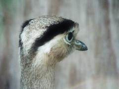 DSCF0189 (Stonehenge 68) Tags: zoo birmingham snake alabama lizard plantation antebellum birminghamzoo arlingtonhouse