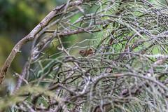 Bird in the bush (dalejckelly) Tags: canon landscape scotland vista summer elvanfoot lanarkshire sun turbine wind trees tree bird bush