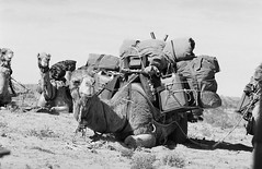 RAD20160610_028 - Munga Thirri Expedition, Simpson Desert AUS  (Kodak BW400CN) (Cecilia Temperli) Tags: rad20160610 arollinadayadayinaroll australia camelexpedition camels trekking desert packcamels film kodak kodakbw400cn nikon nikonfm3a simpsondesert mungathirrisurveyexpedition dromedary australiandesertexpeditions