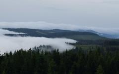 Fog avalanche - Nebellawine (Lala89_Photos) Tags: nebel fog landscape landschaft forest wald black blackforest