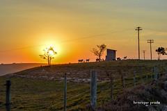Sunset at the farm (henriiqueprado) Tags: nikond3200 sunset pordosol natureza nature 50mm 18 expressyourself