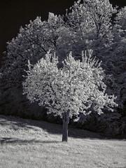 DSC00252re (vorinami) Tags: nature ir infrared f828 hoya r72