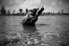 Driftwood (Harry Kool) Tags: wood colour water blackwhite zwartwit sweet driftwood medemblik ijsselmeer