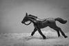 Al galope (Marmotuca) Tags: bw horse byn blancoynegro caballo velocidad composición galope cabalho