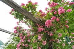 20150523-DS7_0910.jpg (d3_plus) Tags: street bridge sea sky plant flower building nature rose japan garden walking spring scenery outdoor fine wideangle daily architectural bloom  streetphoto   shizuoka    dailyphoto  izu  atami thesedays superwideangle     fineday      tamron1735  a05    tamronspaf1735mmf284dildasphericalif  tamronspaf1735mmf284dildaspherical architecturalstructure d700    nikond700 tamronspaf1735mmf284dild tamronspaf1735mmf284  nikonfxshowcase