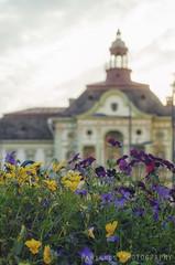May in the hometown (freshandfun) Tags: city flower spring cityhall serbia springtime vojvodina zrenjanin