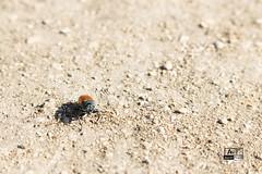 Vida en lo inhóspito (Alejandro Tirado) Tags: naturaleza textura animal de campo bicho poca arenoso paraje profundidad rugoso inhóspito