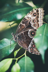 Butterfly (.craig) Tags: plants brown plant green nature butterfly bug insect leaf wings dof natural wildlife butterflies leafs antenna antennae
