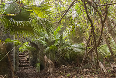 Wild garden  nature taking over (jonathan charles photo) Tags: wild art nature topf25 photo jonathan charles jungle bermuda southlands