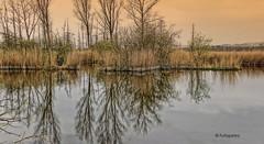 Im Brenner Moor (petra.foto on/off) Tags: nature germany deutschland sony natur bad brenner moor landschaft schleswigholstein trave oldesloe badoldesloe flus morgends fotopetra