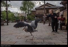Japan (buiobuione) Tags: japan tokyo kyoto osaka nara giappone