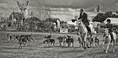 A Day Off (Andy Gant) Tags: horses blackandwhite bw horse dogs monochrome hat grey mono farmers hunting hound pony fox layers essex whitehorse hunt bwphotography hounds greys foxhounds 2016 essexyoungfarmersshow countryshow dogsdogsdogs roxwell bweffect bwimages essexhunt bwimagesfromaroundtheworld