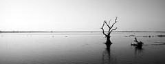(cherco) Tags: blackandwhite tree blancoynegro water mystery arbol death agua alone horizon tranquility panoramic panoramica myanmar minimalism minimalismo calma horizonte descanso misterio muerto tranquilidad canoneos5diii