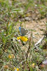 Papillon (nrocher) Tags: flowers orange brown macro green nature fleur yellow fleurs jaune butterfly fly flying nikon little bokeh sigma vert 300mm papillon micro marron buterfly petit papillons d3200 buteerfly lofwer