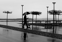 With the small dog (pascalcolin1) Tags: sea dog chien mer reflection rain umbrella noiretblanc pluie reflets streetview parapluie capferret photoderue blackandwithe dunedupilat rverbres urbanarte photopascalcolin