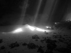 ray of light (chipmonk) Tags: egypt diving safari corals morayeel tauchen 2016 cavereef