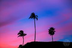 Island Trio (brandon.vincent) Tags: sunset sky black tree art silhouette rock island hawaii fine maui palm lahaina kaanapali