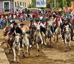 Est a chegar a grande festa do Ribatejo. Sabem qual ? #touradas #ribatejo (Protoiro) Tags: toros bullfight tauromaquia touradas protoiro