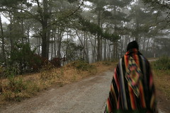 Today's serape selfies in the foggy wood (LOLO Italiana) Tags: ca wood trees fog forest landscape blurry selfportraits pacificgrove pathways serapes remoteshutterrelease foggyforest figurewalking figuredancing figurespinning loloitaliana loridambrosio figurewearingaserape