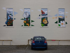 Kiwi Dreams (Steve Taylor (Photography)) Tags: city blue newzealand christchurch streetart flower building bird art car wall butterfly insect graffiti leaf mural canterbury nz frame bmw southisland cbd kiwi carpark reserved gravel