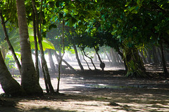 Wild Beach (Neil R Meninick) Tags: wild beach sand rainforest costarica surf palmtrees tropical windblown dominical seaspray