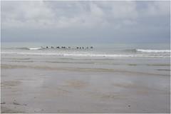 Normandie_16 *31 (KKS_51) Tags: mer france wanderer bassenormandie