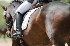 IMG_3302 (dreiwn) Tags: horse pony horseshow pferde pferd equestrian horseback reiten horseriding showjumping dressage reitturnier dressur reitsport dressyr ilsfeld dressuur ridingclub junioren ridingarena pferdesport springreiten reitplatz reitverein dressurreiten dressurpferd dressurprfung tamronsp70200f28divcusd jugentturnier