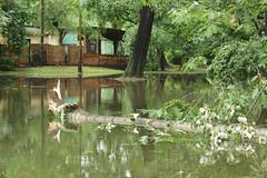 Po ulewie (Eri_pl) Tags: summer tree rainpuddle