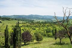 Greve in Chianti - Landscape 2 (Le Monde1) Tags: italy castle landscape florence nikon wine vine tuscany tasting toscana renaissance greve grapevine greveinchianti d610 castellovicchiomaggio lemonde1