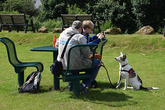 Monmouth Picnic Time (Jainbow) Tags: monmouth jainbow monnow park grass picnic lina collie cross rescue dog