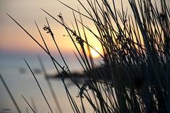 Dawn (Fede Z.) Tags: sardegna sea sun plant silhouette dawn mare alba sole pianta