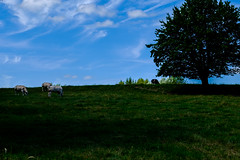 20160724-DSCF0713 (Captivating_Colors) Tags: outdoors outdoor outside nature naturephotography naturelover fuji fujifilm xt1 fujixt1 fujifilmxt1 fujixseries fujifilmxseries fujifeed vlaamseardennen vlaamse ardennen 2016 summer vlaanderen flanders belgium vividsimulation vivid landscape landscapelover scenery view rustic scene landscapephotography sky skyporn skylover skylovers cloud clouds cloudporn cloudlover cloudlovers skyline country countryside grassland field plant grass plain