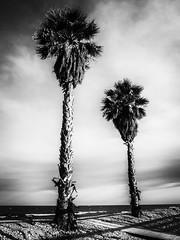 _7250500-Editar (josem_alvarez25) Tags: playa banco y negro mar caseta palmeras olympus omd em10