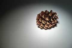 Sun 26-Apr (116 / 365 / 2015) - Pine cone (Steev McAlister) Tags: day event 365 pinecone dates edition 116 day116 2015 116365 day116365 365the2015edition 3652015 26apr15