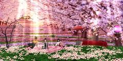 Hanami has come around (BlueLotusOkiya) Tags: secondlife geisha miyakoodori bluelotusokiya kisetsuodori