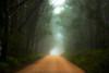 Clearing (Kent Wilkins) Tags: road trees cloud mist grass fog landscape bush flickr australia blurred estrellas queensland stanthorpe creativemindsphotography coppercloudsilversun blinkagain inspiringcreativeminds