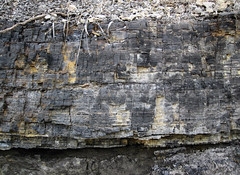 Meigs Creek Coal (a.k.a. Sewickley Coal) (Monongahela Group, Upper Pennsylvanian; Narrows Run North Rt. 7 roadcut, Belmont County, Ohio, USA) 2 (James St. John) Tags: county ohio creek river belmont group run upper coal narrows monongahela sewickley meigs pennsylvanian bituminous
