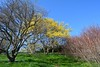 Spring at Highland Park. (melike erkan) Tags: park trees sky tree nature grass spring upstatenewyork blueskies highlandpark rochesterny greengrass planetearth westernny skie naturescall treephotos planetearthourhome