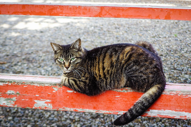 Today's Cat@2015-05-06