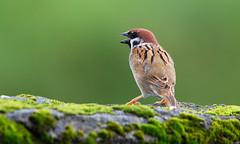 (chang64330) Tags: 鳥